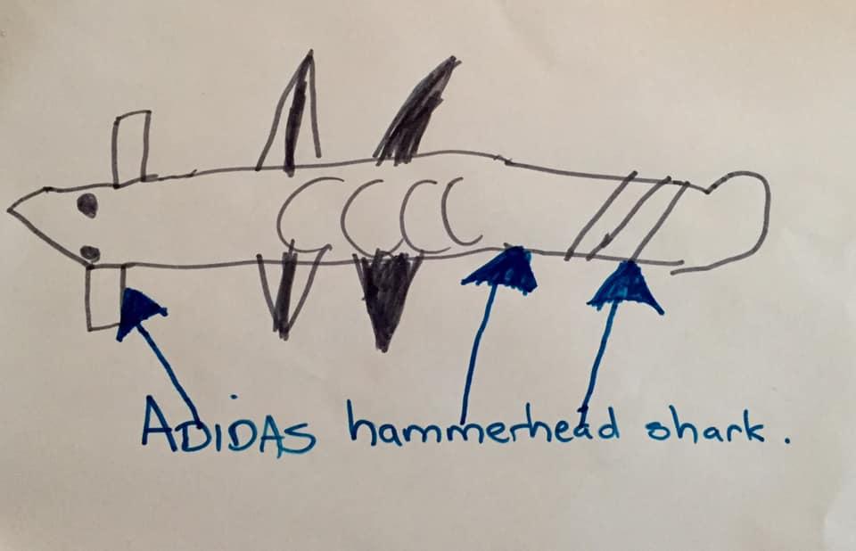 Adidas hammerhead shark